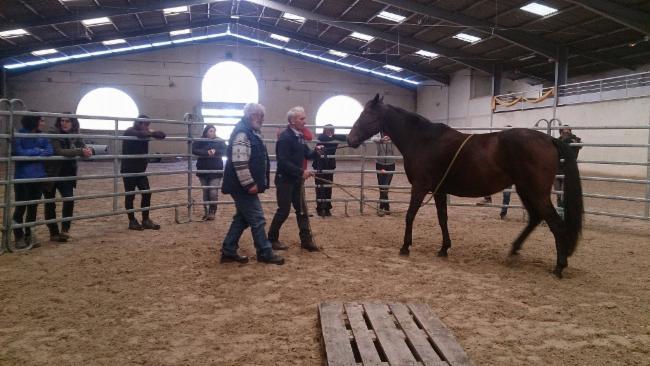 Pierre BLIN LACROIX ST OUEN services a la personne aux animaux conseil services a la personne aux animaux