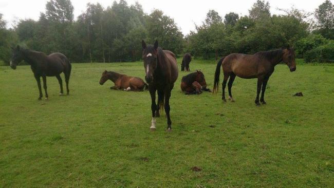 Pierre BLIN Lacroix Saint Ouen Prairie Philosophique travail en securite avec les chevaux ÉDUCATEUR DE CHEVAUX