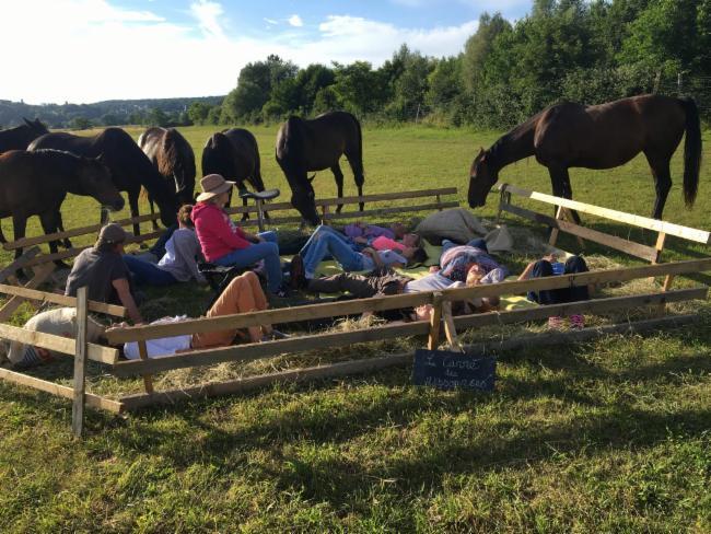 ÉDUCATEUR DE CHEVAUX Connaissance du cheval Éthologie, Végétale,Animale,Humaine Prairie Philosophique travail en securite avec les chevaux