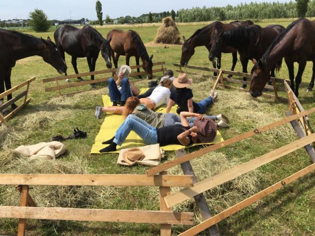 travail en securite avec les chevaux ÉDUCATEUR DE CHEVAUX Connaissance du cheval Éthologie, Végétale,Animale,Humaine