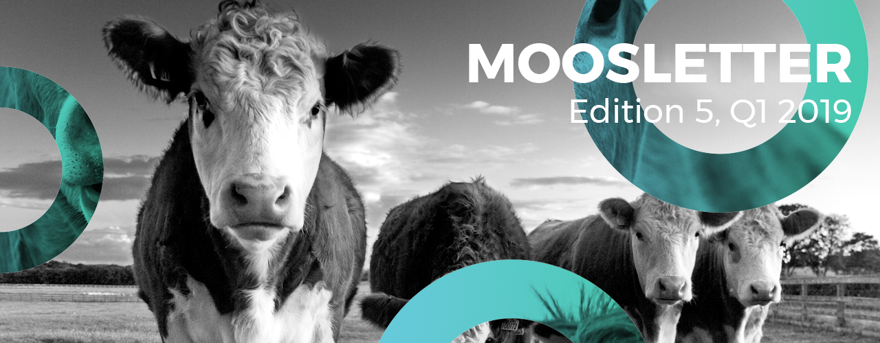 Moosletter - E4 July 2018