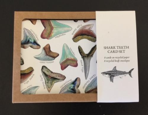 Fossil Shark Teeth Card Set