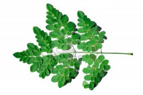 12 Steps to Healing Debilitating Diseases: The Moringa Self Healing System©