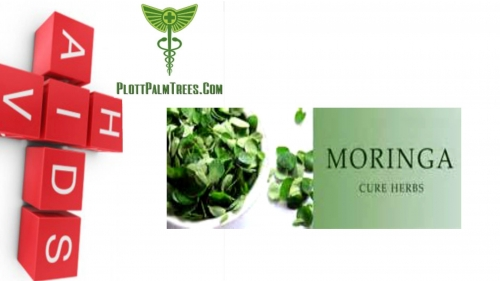 "Does Moringa 'cure"" AIDS, HIV and Cancer? Learn the Truth"