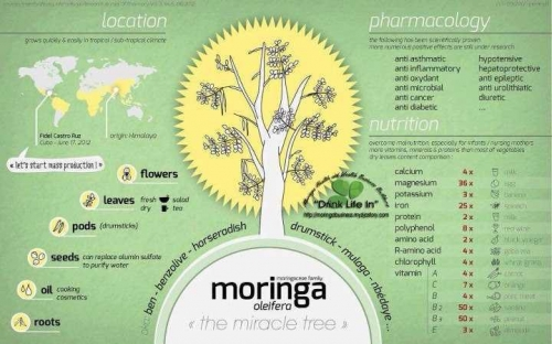 What is Moringa Oleifera? & Health Benefits of Moringa