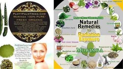 ∆ Moringa and Lyme Disease † PLOTTPALMTREES.COM ~E.G.Plott~ Dr. Fischer
