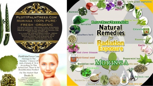 Moringa Blocks Radiation From Cellular Levels ~E.G.Plott~