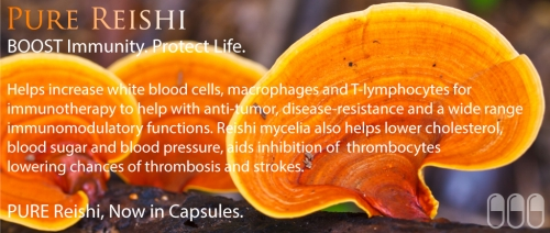 Mushroom Wisdom. Super Reishi Mushroom Elixir of Immortality - MOST POWERFUL SUPERFOOD KNOWN ~E.G.Plott~