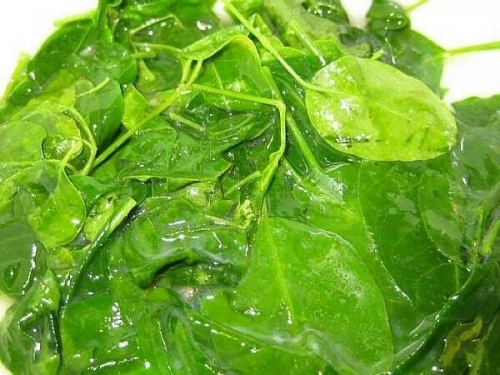 PROOF: PARKINSON AND DIABETES CURED With Moringa Raw From ~E.G.PLOTTPALMTREES.COM~