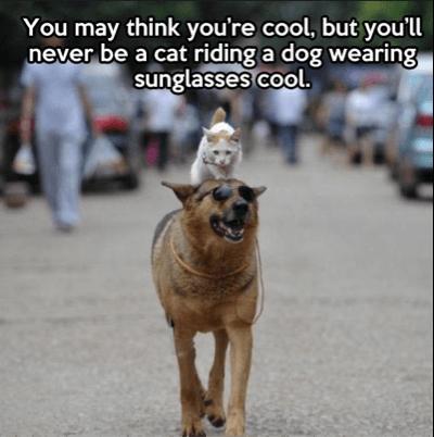 cat_riding_dog