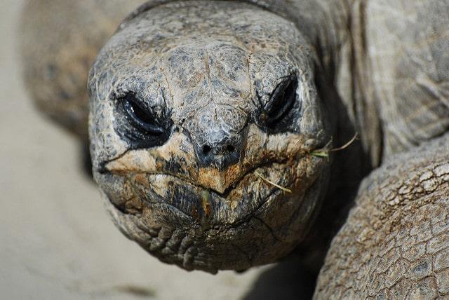 grumpy tortoise