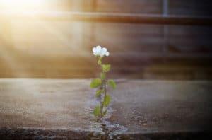 flower rebirth - Improving MCAT Score