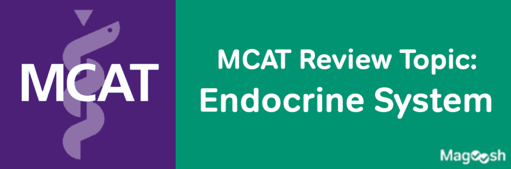 MCAT Endocrine System -magoosh
