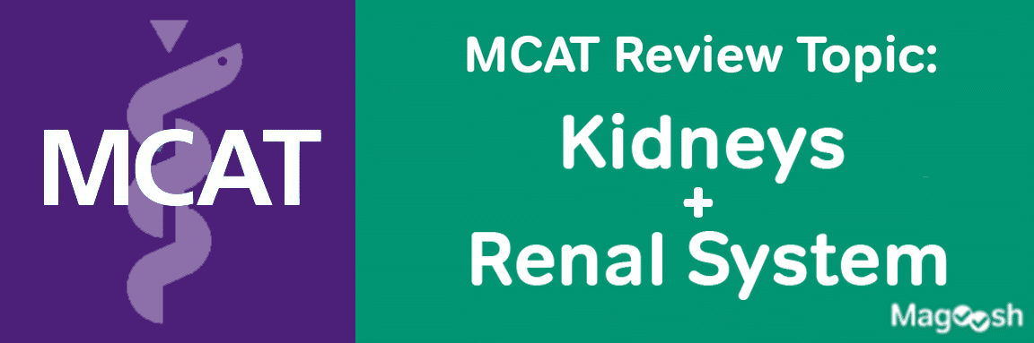 MCAT Kidneys and Renal System