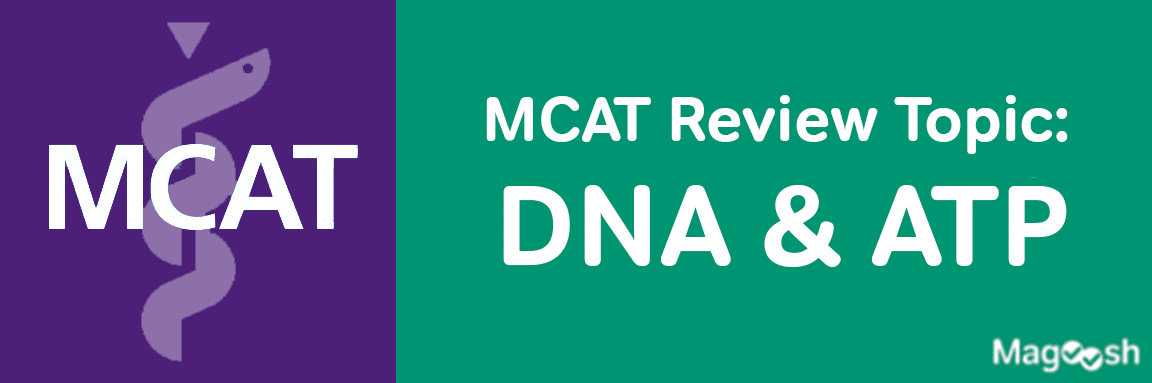MCAT DNA and ATP -magoosh