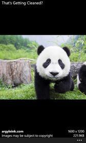 The Panda 🐼