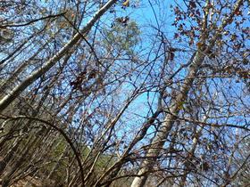 Woods of Georgia
