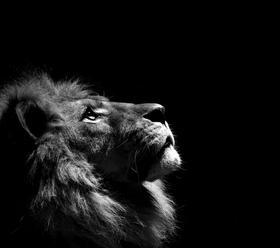 Dope Ass Lion