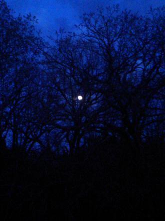The shy moon!