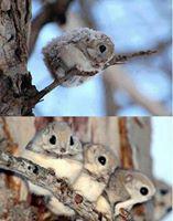 Cuteness_Rolled