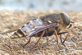 Creepy massive wasp thing