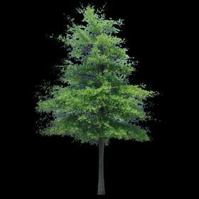 Test tree