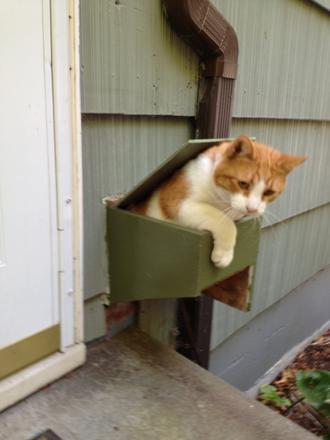 Efficient cat door