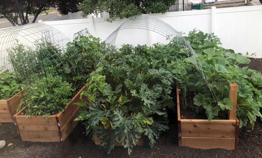 Garden Box Photo
