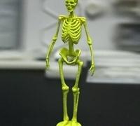 Human skeleton 3D models for 3D printing | makexyz com