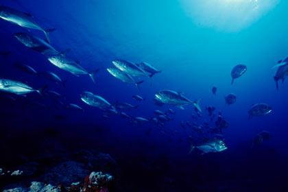 mako spearguns underwater image