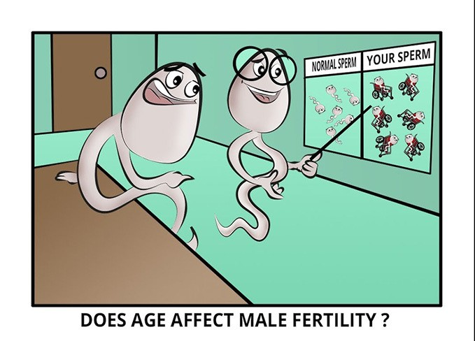 male fertility age