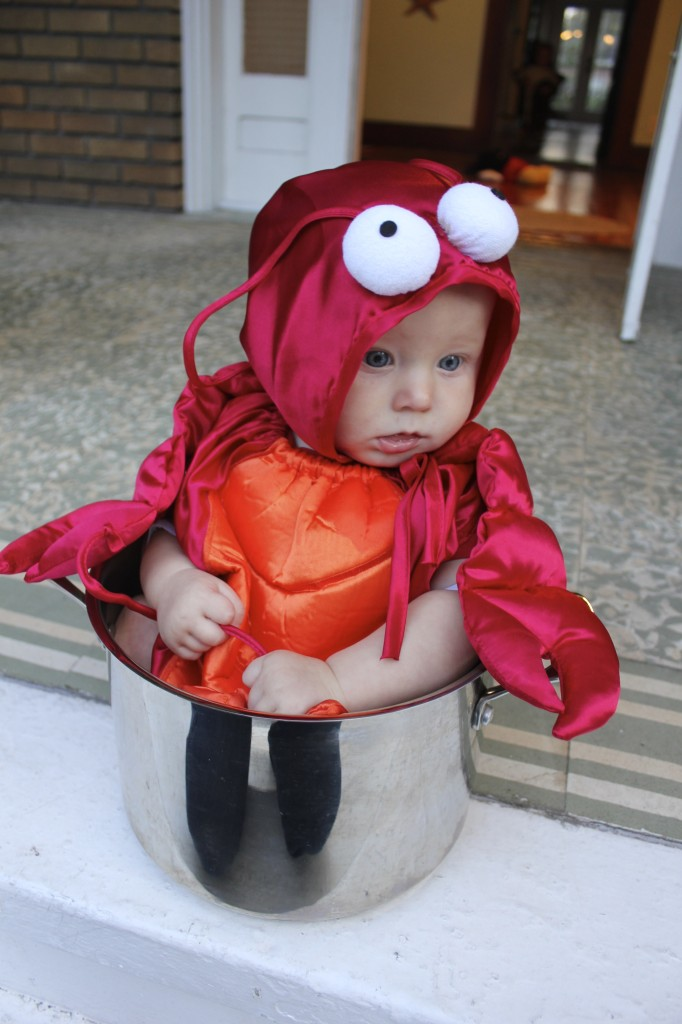 the cutest baby lobster costume