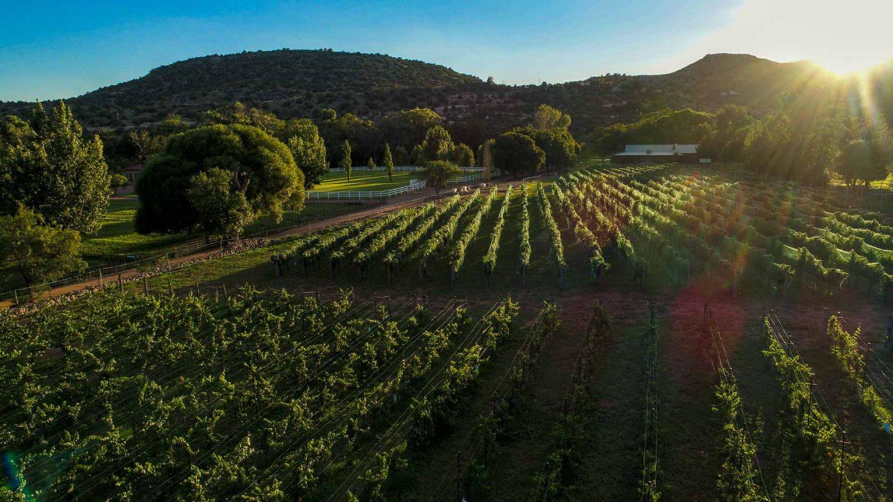 Vineyards of Verde Valley