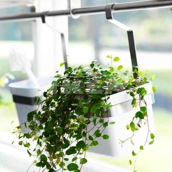 6 ways to add indoor plants