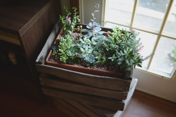 Created Succulents via [http://blytheponytailparades.typepad.com/my-blog/2013/07/crated-succulents.html]
