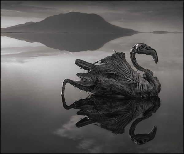 Lake Natron in Africa turns animals into stone