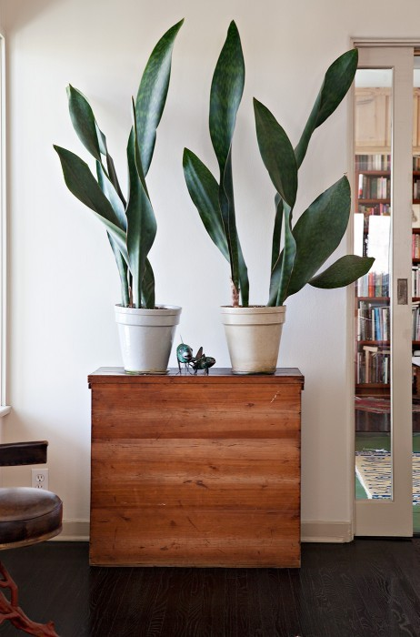 space fillers - adding greenery
