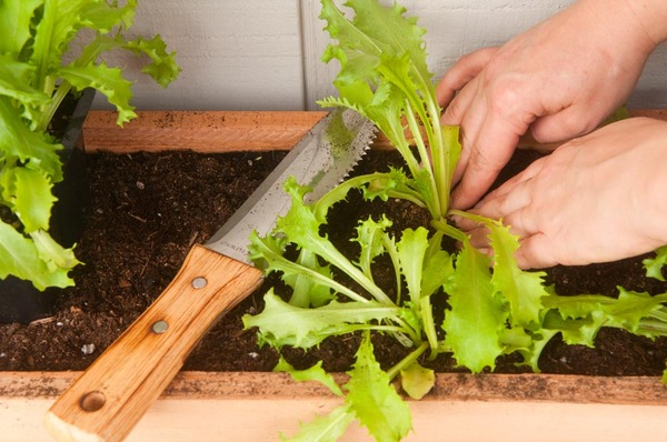 planting vegetables into the vertical garden