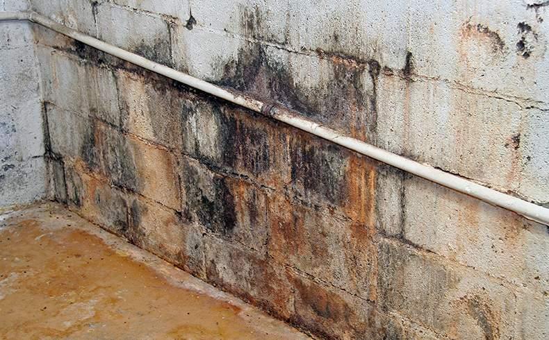 Dicas para vencer a umidade nas paredes
