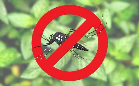 Combate ao Aedes aegypti