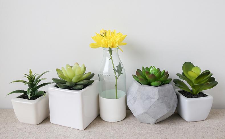 10 plantas para cultivar dentro de casa neg cios mapa - Plantas aromaticas en casa ...