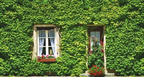 Muro verde que embeleza