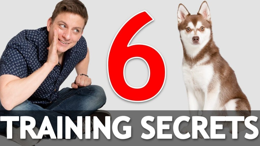 6 Dog Training Secrets in 5 Minutes!
