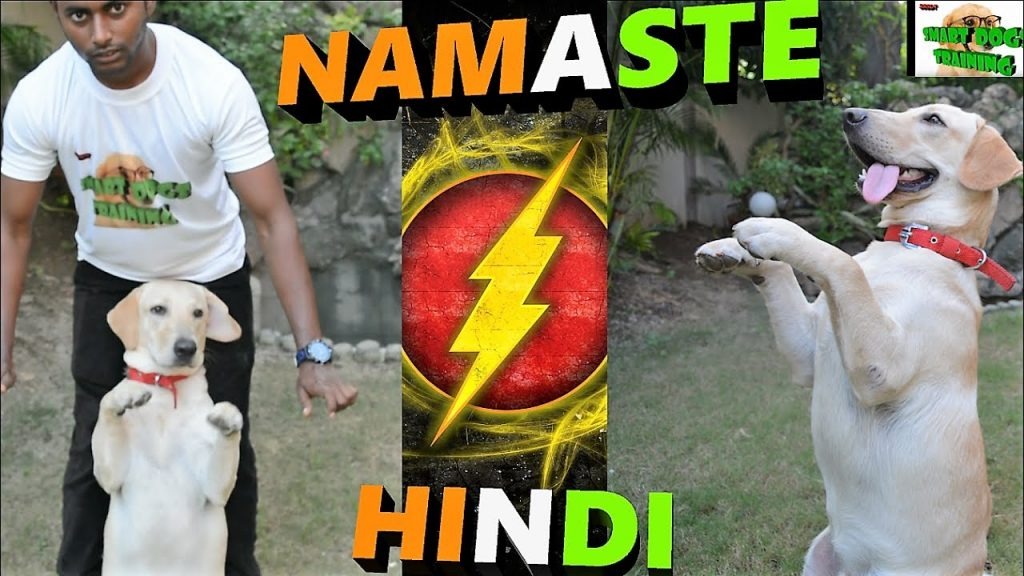 How To Teach Your Dog NAMASTE / SALUTE  || dog training in hindi ||