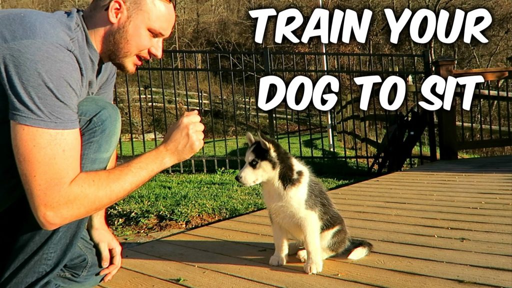 How to Train Your Dog to Sit – Dog Training