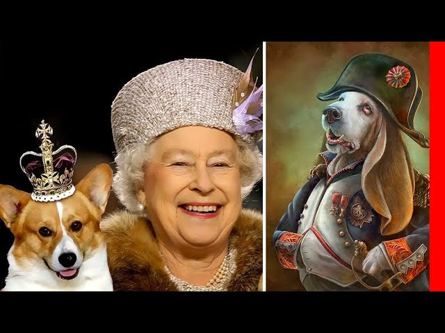 TOP 10 ROYAL DOG BREEDS