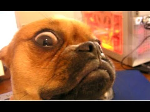 Top 10 Funny Dog Videos – Funny Dogs 2017