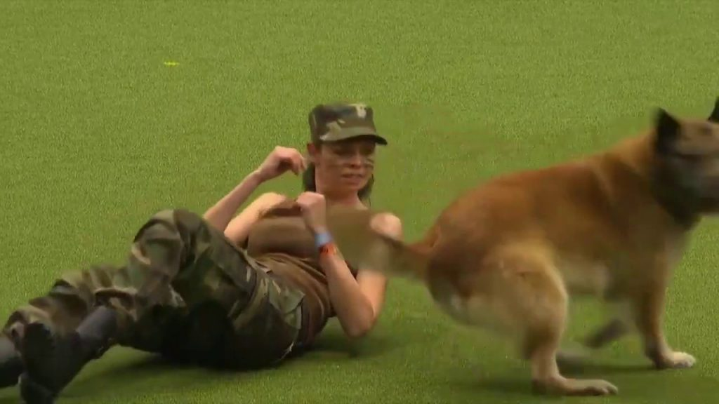 The final level in dog training … must watch til end