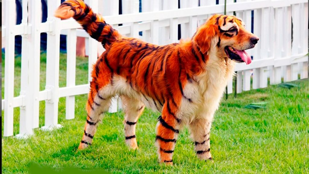 5 Weirdest Dog Breeds You Will Ever See!