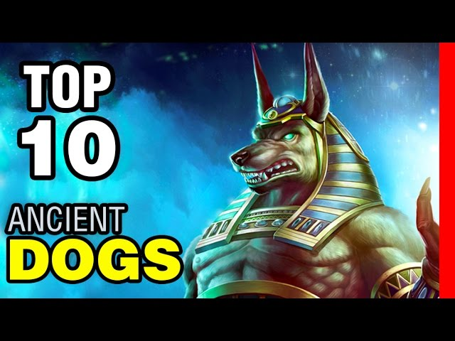 TOP 10 ANCIENT DOG BREEDS